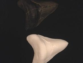 megalodon gescannt fossilen zahn Biologie 3d-Scannen Fossilien prähistorische shark