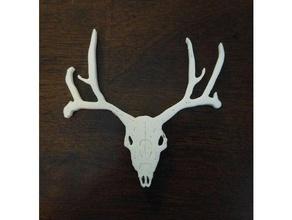 cervi cranio 2d art palchi cervi le corna longhorns renna cranio