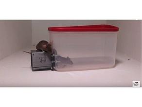 mouse rat trap animal animal trap mice mice trap mouse mouse trap monday mousetrap mouse trap