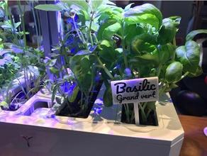 basilic grand vert panneau plantation outdoor & garden customized