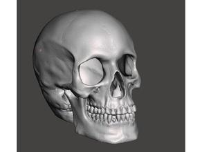 cavità del cranio w in frantumi osso occipitale scansioni & repliche cavità del cranio cranio umano cranio