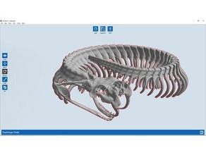 gaboon viper iskelet açıkladı hayvanlar fang fangs posable sürüngen sürüngenler bilim iskeletler kafatası yılan yılanlar Viper