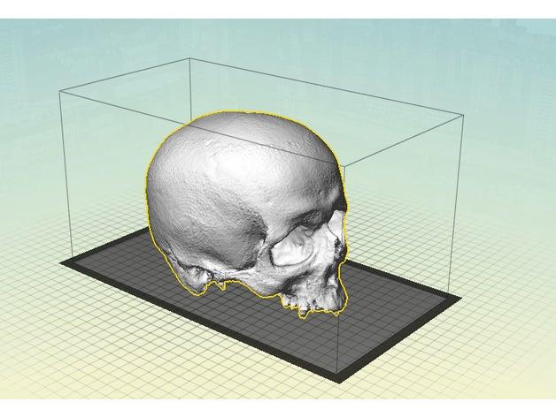 yorick other human skull