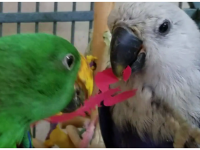 18 carta dei giocattoli uccelli trituratori foraggiamento scatole rompicapo forme