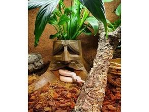 zelda deku tree ballpython cave deku dekutree knigspython planter python snake zelda