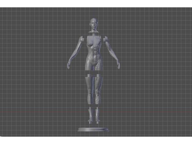 female anatomy reference