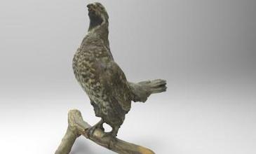 tetrastes bonasia hazel grouse nature 3D printing model, 3D printing file, 3D printable model, 3D printing design, 3d print, birds, animal, bird, nature, Tetrastes, bonasia, hazel, grouse