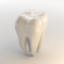 tooth science 3D printing model, 3D printing file, 3D printable model, 3D printing design, 3d print, tooth printable, 3d printing, 3d tooth, anatomy, body part, dental, dentist, face, gum, gums, human, Human Teeth, human tooth, mouth, stomatology, teeth, tooth