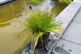 Teich Anlage montiert Blumen Blume Pflanzer Pflanzer Teich Anlage